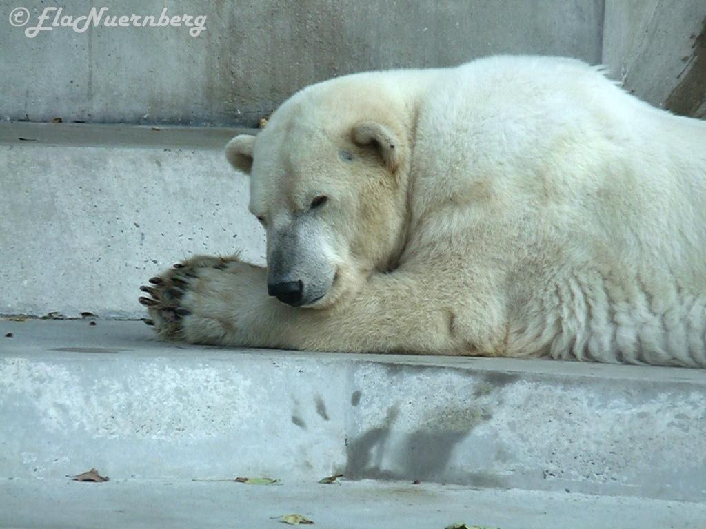 Eisbärin LISA im Eisbärenhimmel
