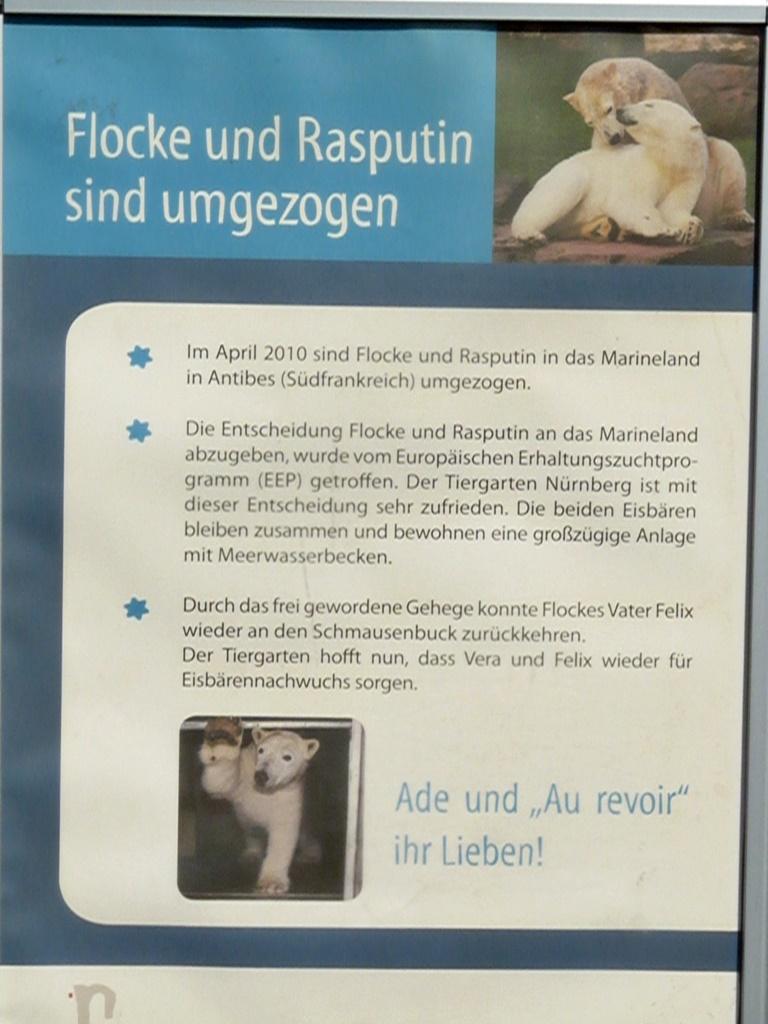 Worte - Info - Umzug Eisbär Flocke und Eisbär Rasputin -Tiergarten Nürnberg - April 2010