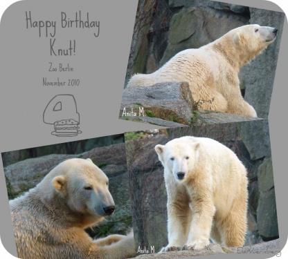 """Eisbärenliebling Knut """"feiert"""" seinen vierten Geburtstag - Zoo Berlin - 12 2010"""
