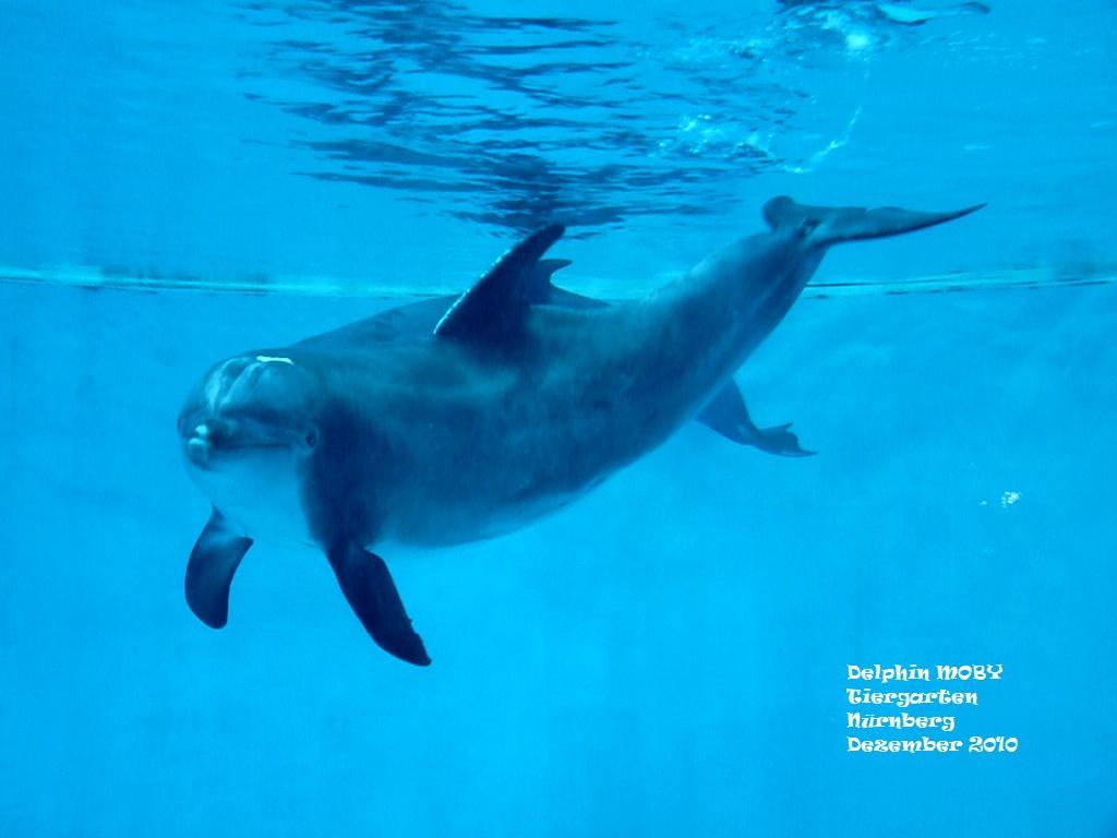 Delphin MOBY - Tiergarten Nürnberg - 12 2010