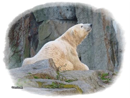 Eisbär Knut - Unvergessen!