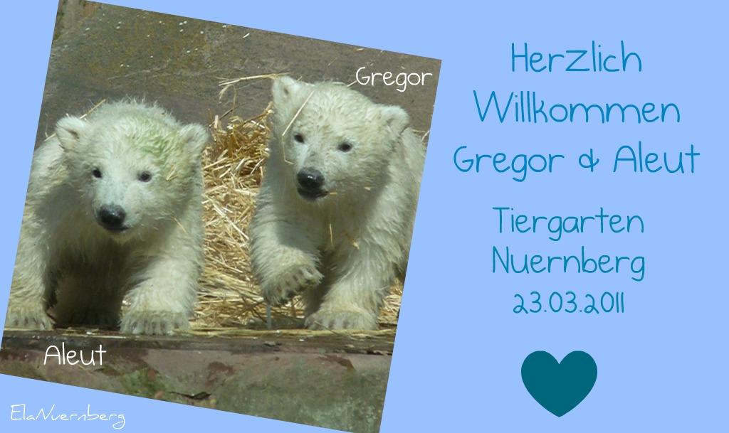 Die niedlichen Eisbärenbuben Gregor und Aleut aus dem Tiergarten Nürnberg - 03 2011