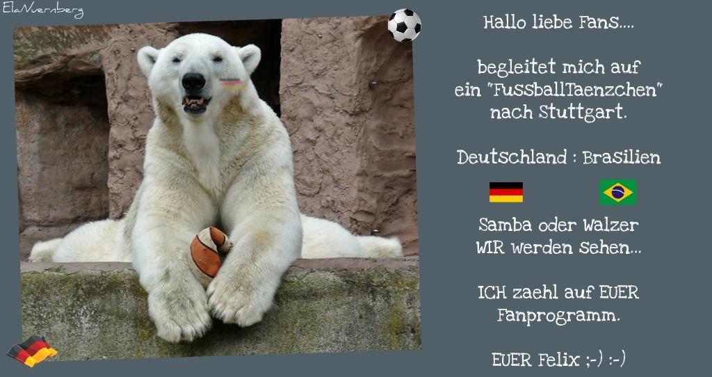 Eisbär Felix DER FanBeauftragte mit Ball im Tiergartem Nürnberg