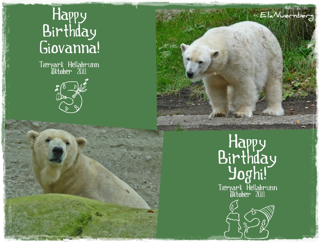 Eisbärenpaar aus dem TP Hellabrunn - Giovanna und Yoghi - 2011