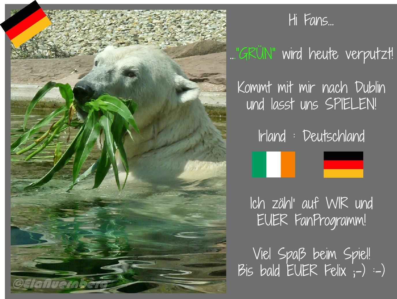 Eisbär Felix DER FanBeauftragte - Tiergarten Nürnberg - 10/2012