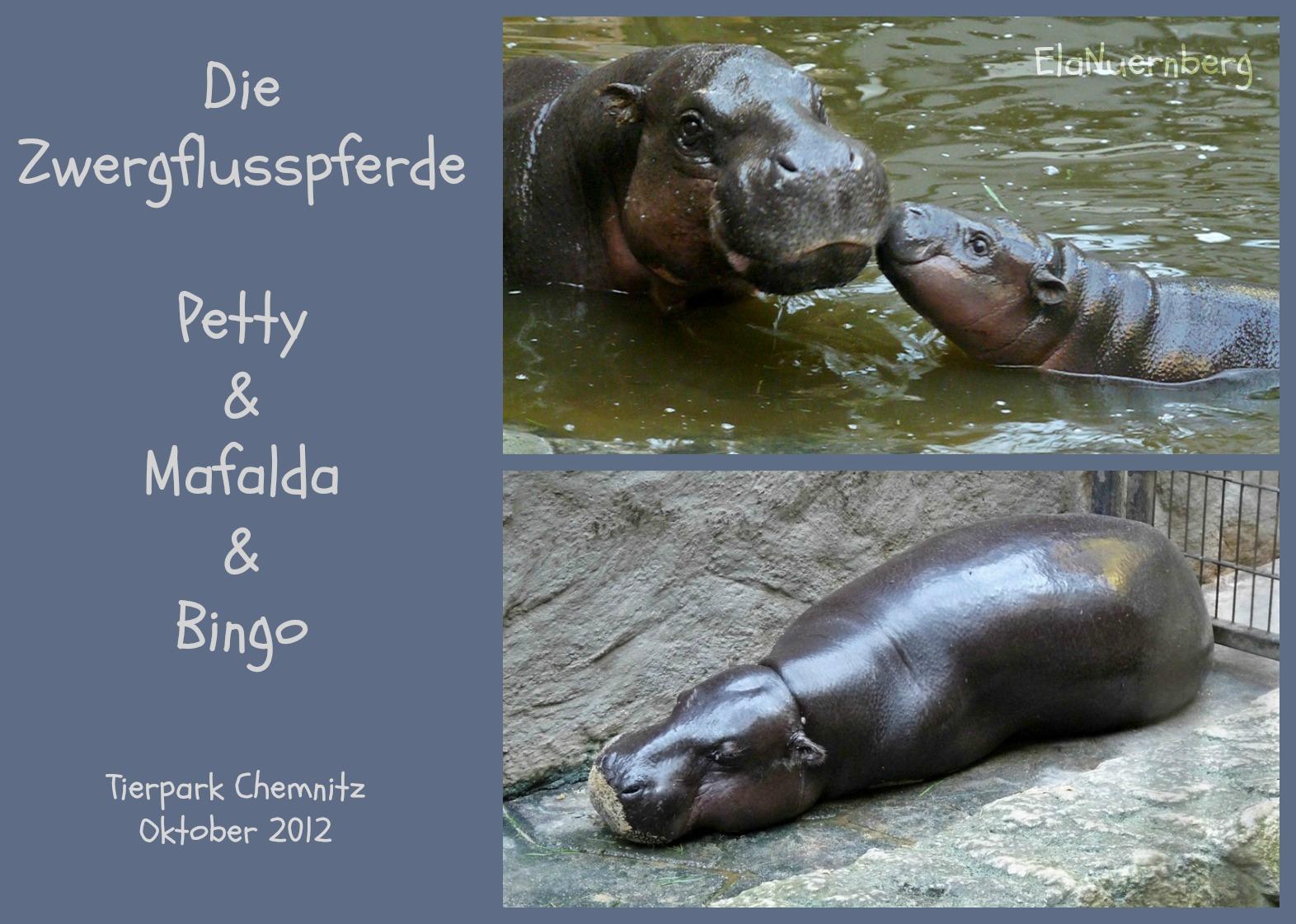 Die Zwergflusspferde Petty, Mafalda & Bingo - Tierpark Chemnitz - 2012