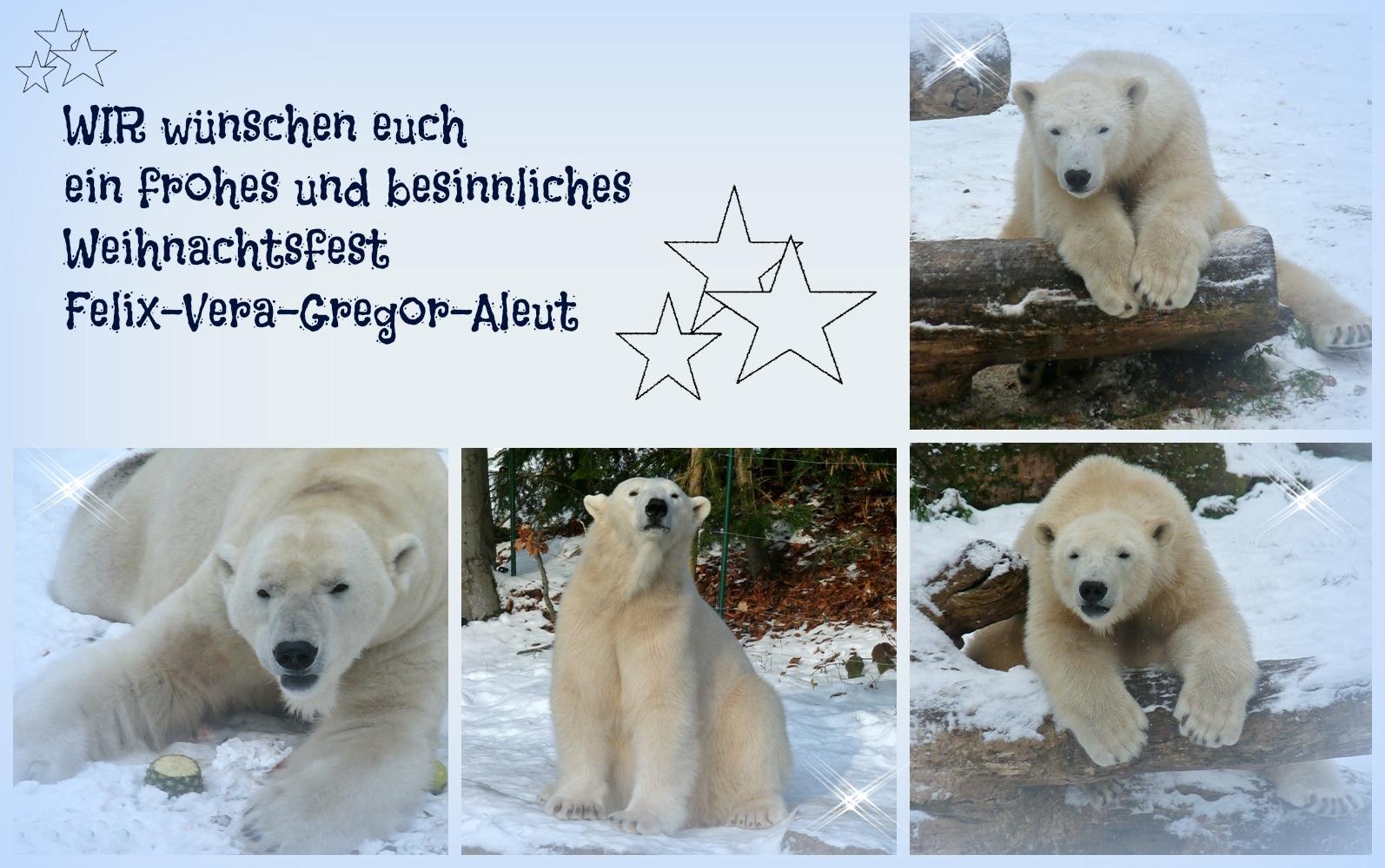 Stille Nacht - Heilige Nacht - Eisbären aus dem Tiergarten Nürnberg - 2012