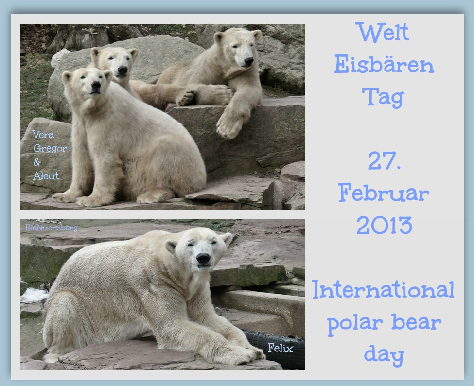 Eisbären VGAF WeltEisbärTag 2013 IPBD