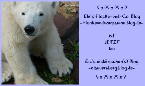 Eisbär Flocke Blog Umzug
