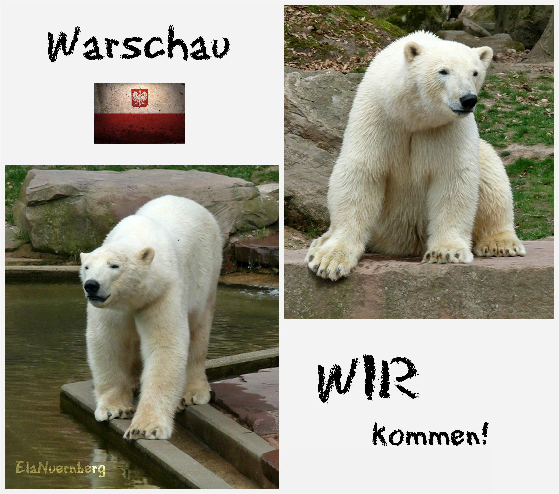 Warschau WIR kommen - Eisbär GREGOR + EISBÄR ALEUT - Tiergarten Nürnberg - 16.04.2011 - Abschied 1