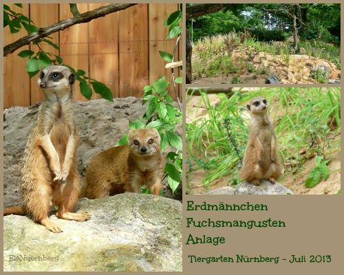 Neue Erdmännchen- und Fuchsmangusten-Anlage TiGa Nbg. 2013