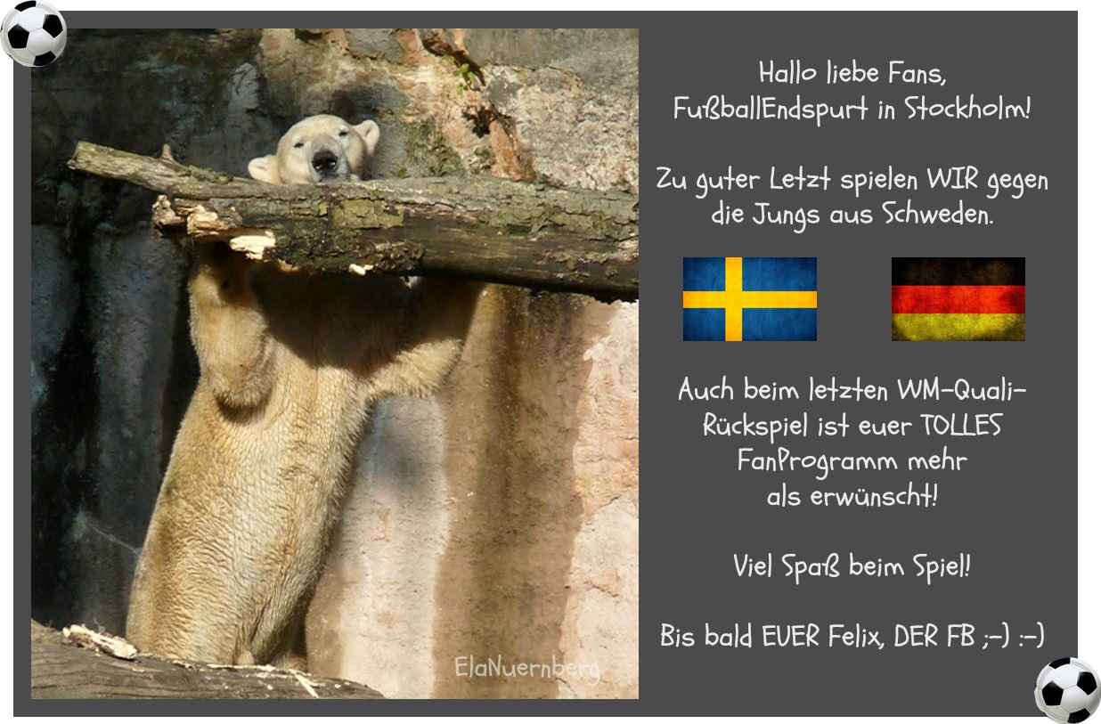 Eisbär Felix DER Fanbeauftragte - 2013