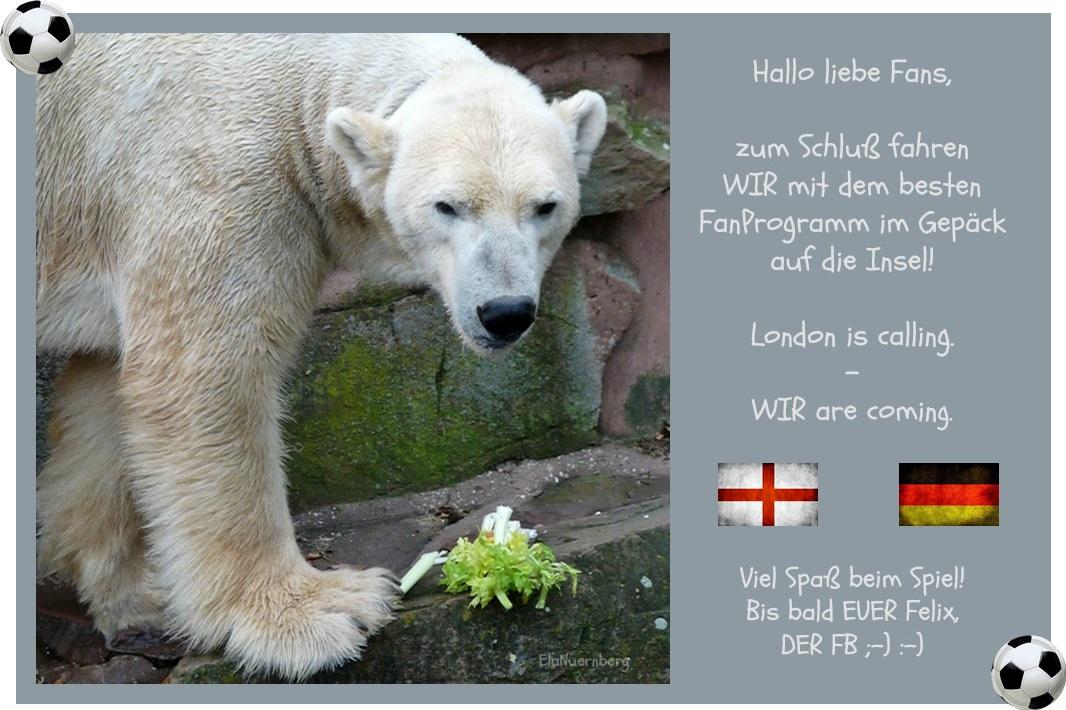 Felix DER FanBeauftragte und Eisbär futtert im Tiergarten Nürnberg