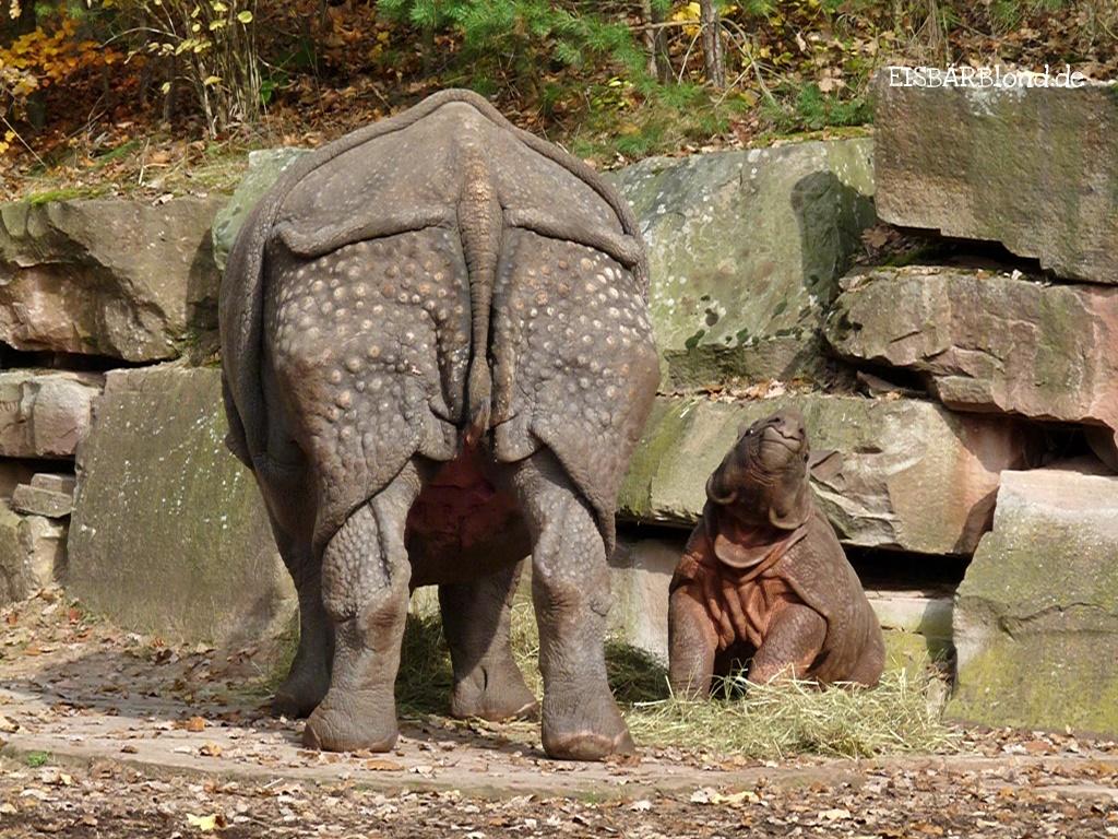 Tierischer Mischmasch - Panzernashörner Purana und Seto Paitala - Tiergarten Nürnberg - 2009