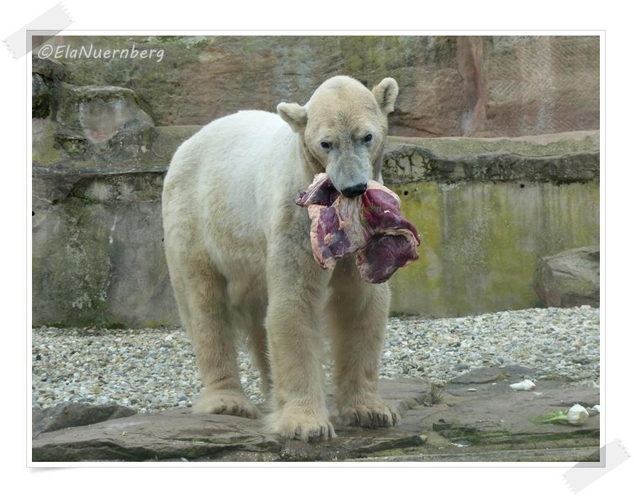 Eisbär Felixmeinsch Eisbärblond