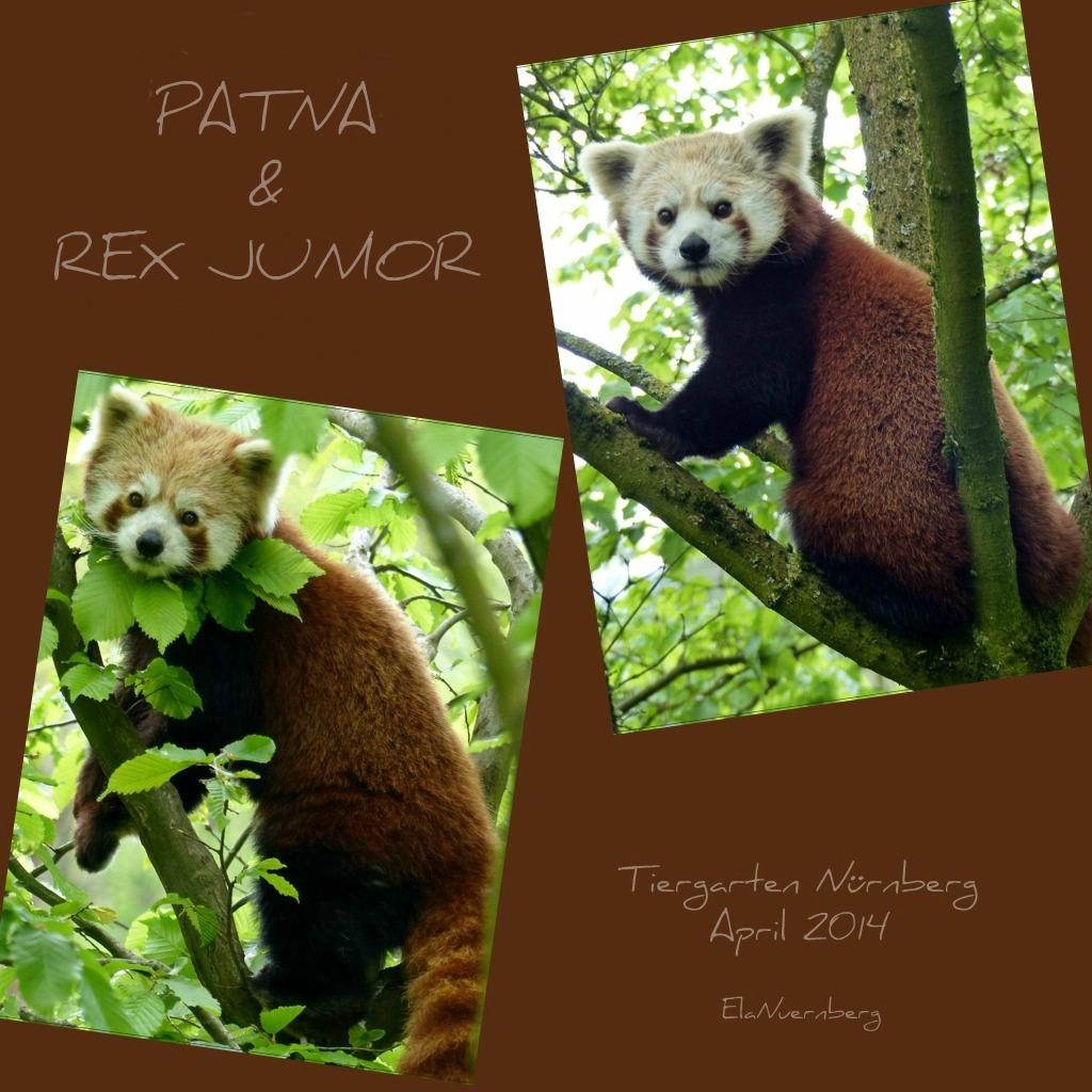 Kleine Katzenbären - PATNA & REX junior