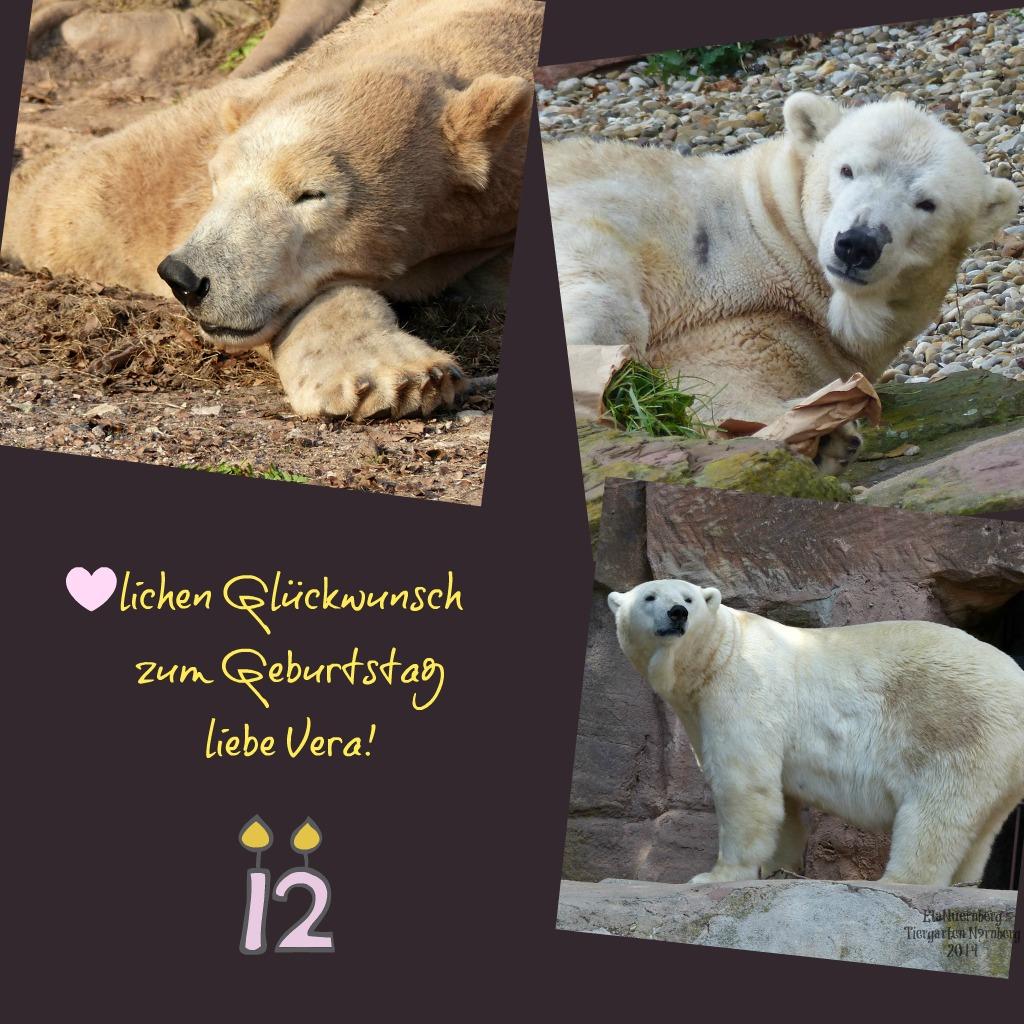 Glückwunsch zum Geburtstag - Eisbärin Vera - 12. Geburtstag - 21.11.2014