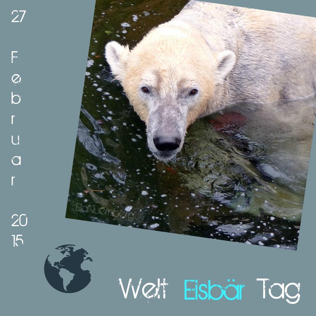 27. Februar 2015 - Welt Eisbär Tag - Eisbär Felix - Tiergarten Nürnberg