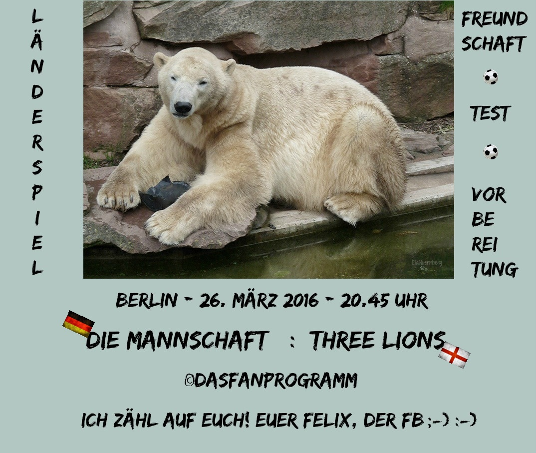 DER FanBeauftragte Eisbär Felix im Tiergarten Nürmberg