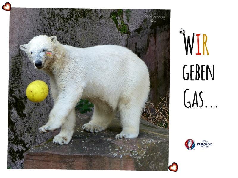 Eisbär Charlotte DAS Fußball-EM-Maskottchen aus dem Tiergarten Nürnberg