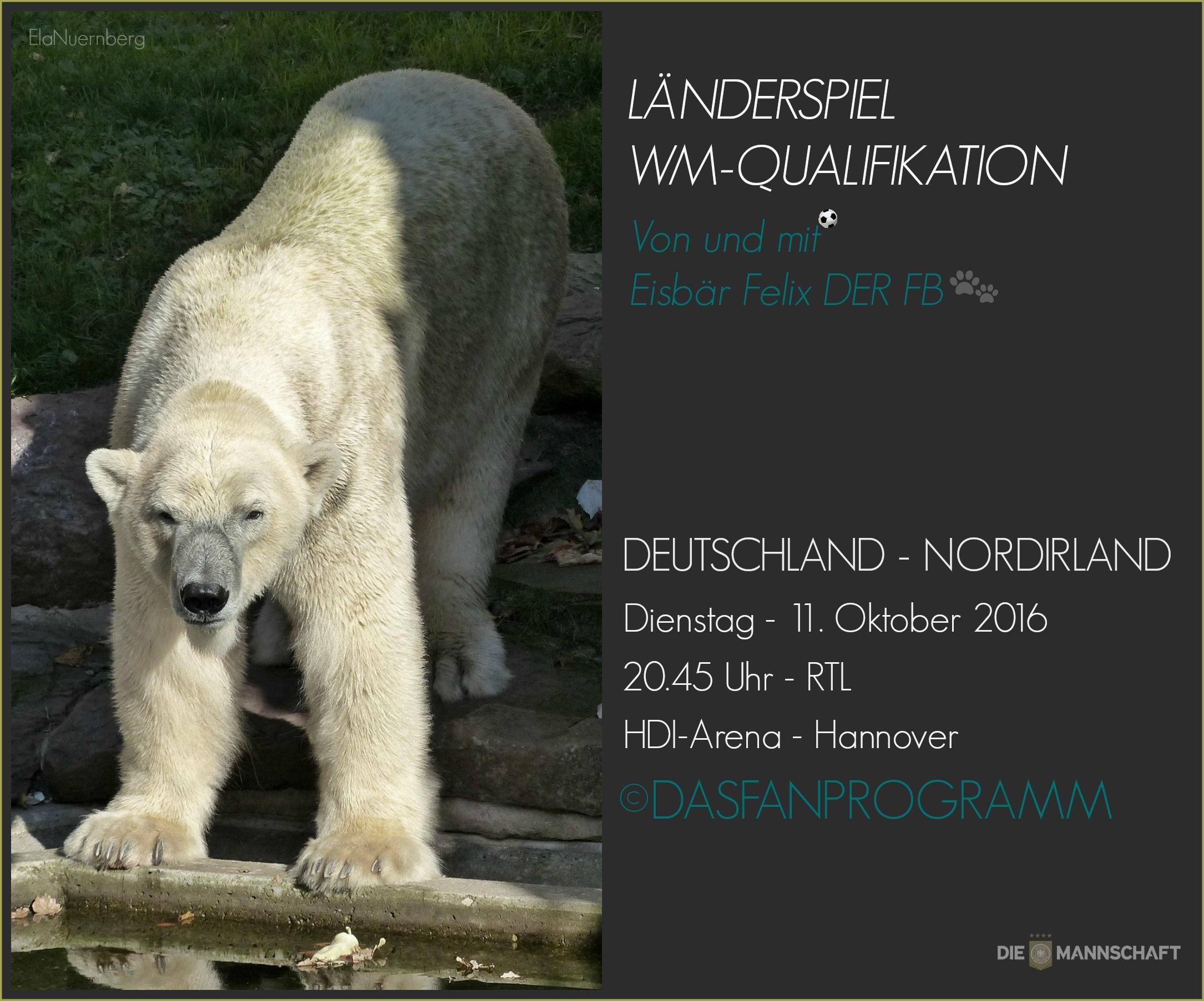 Eisbär Felix DER FanBeauftragte spricht - Tiergarten Nürnberg - 10/2016