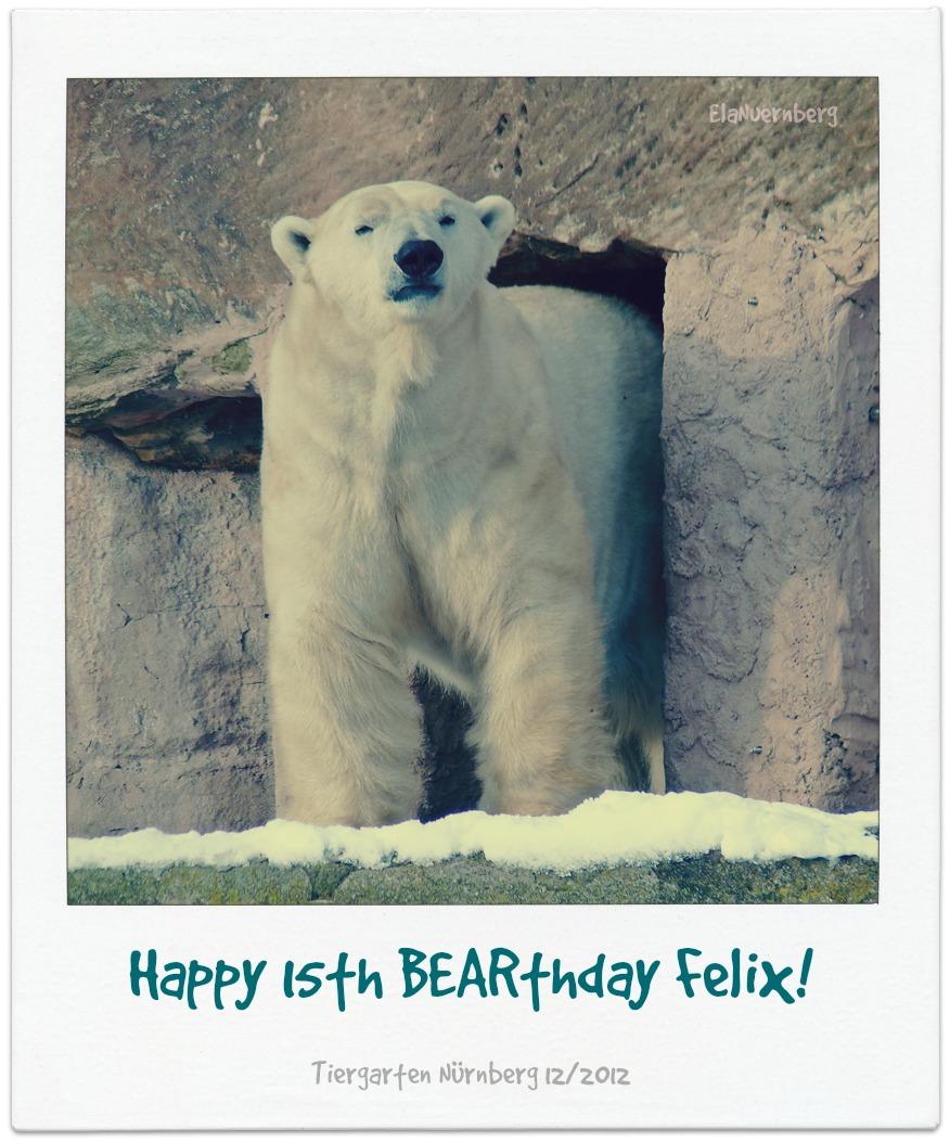 """Eisbär Felix """"feiert"""" 15. Geburtstag."""