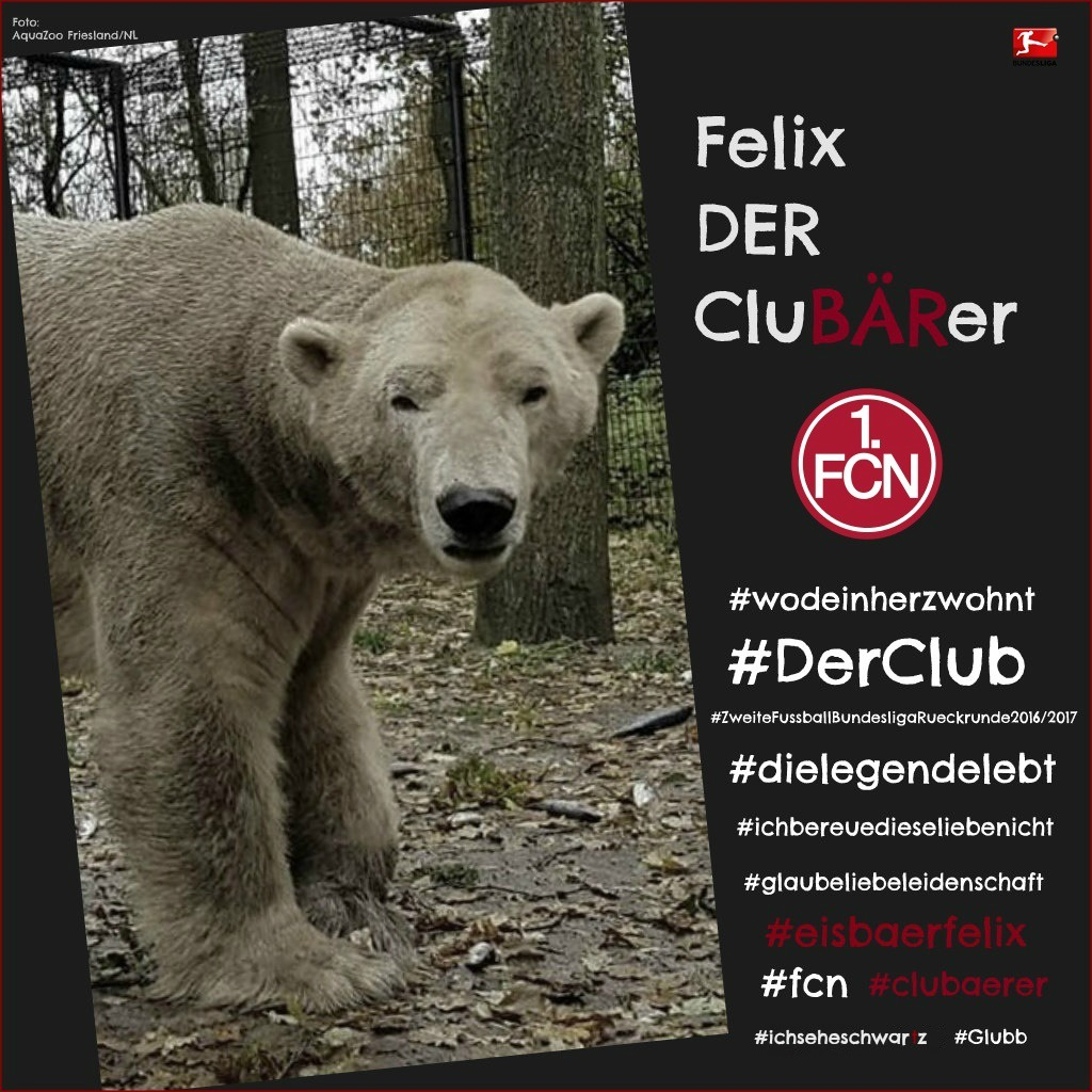 Eisbär und CluBÄrer Felix im AquaZoo Friesland