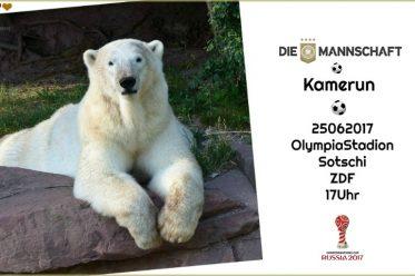 WIR-Anpfiff - Eisbär Charlotte liegt entspannt im Tiergarten Nürnberg