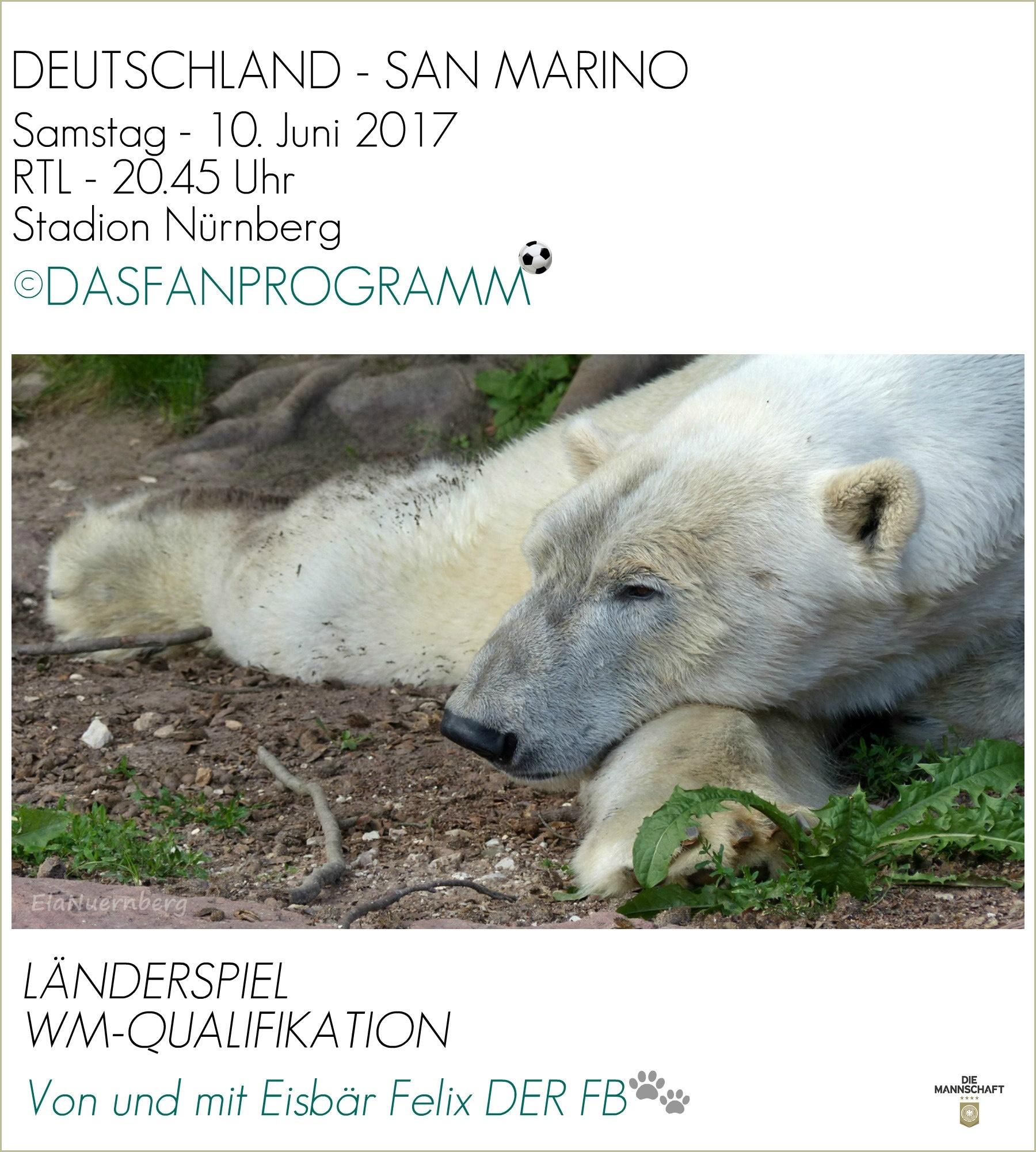 Eisbär Felix DER FanBeauftragte im Tiergarten Nürnberg