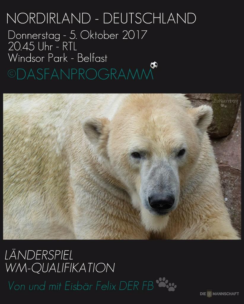 Eisbär Felix DER FanBeauftragte - Tiergarten Nürnberg