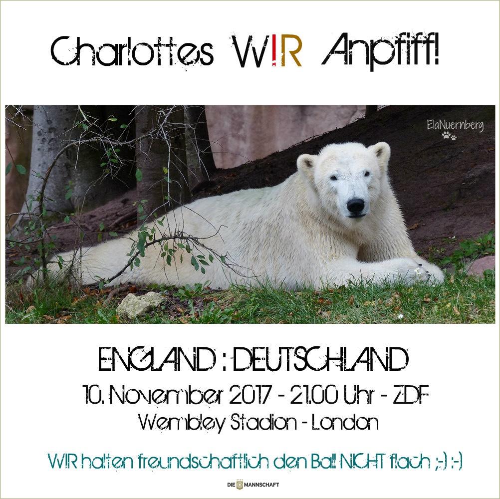 Eisbär Charlottes WIR-Anpiff! - Tiergarten Nürnberg - 11/2017