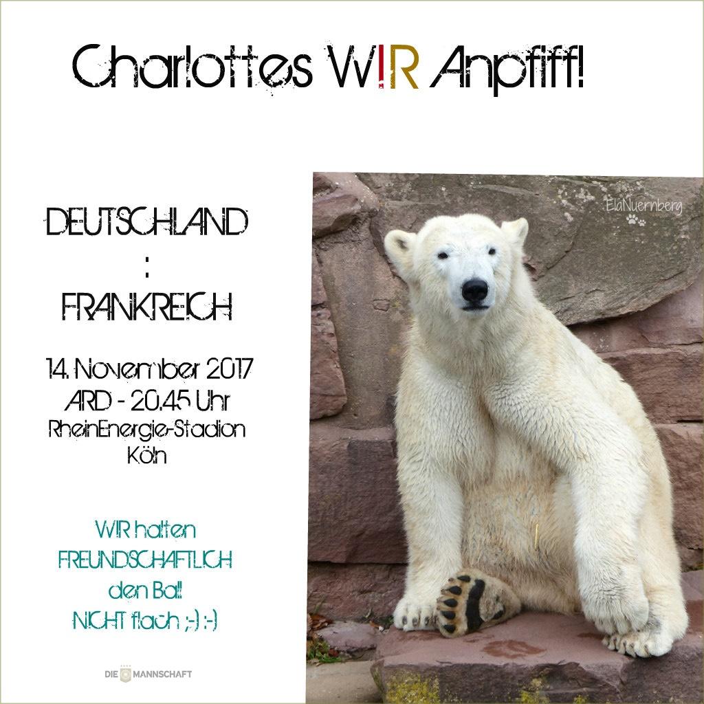 Eisbär Charlottes WIR-Anpfiff! - Tiergarten Nürnberg - 14.11.2017