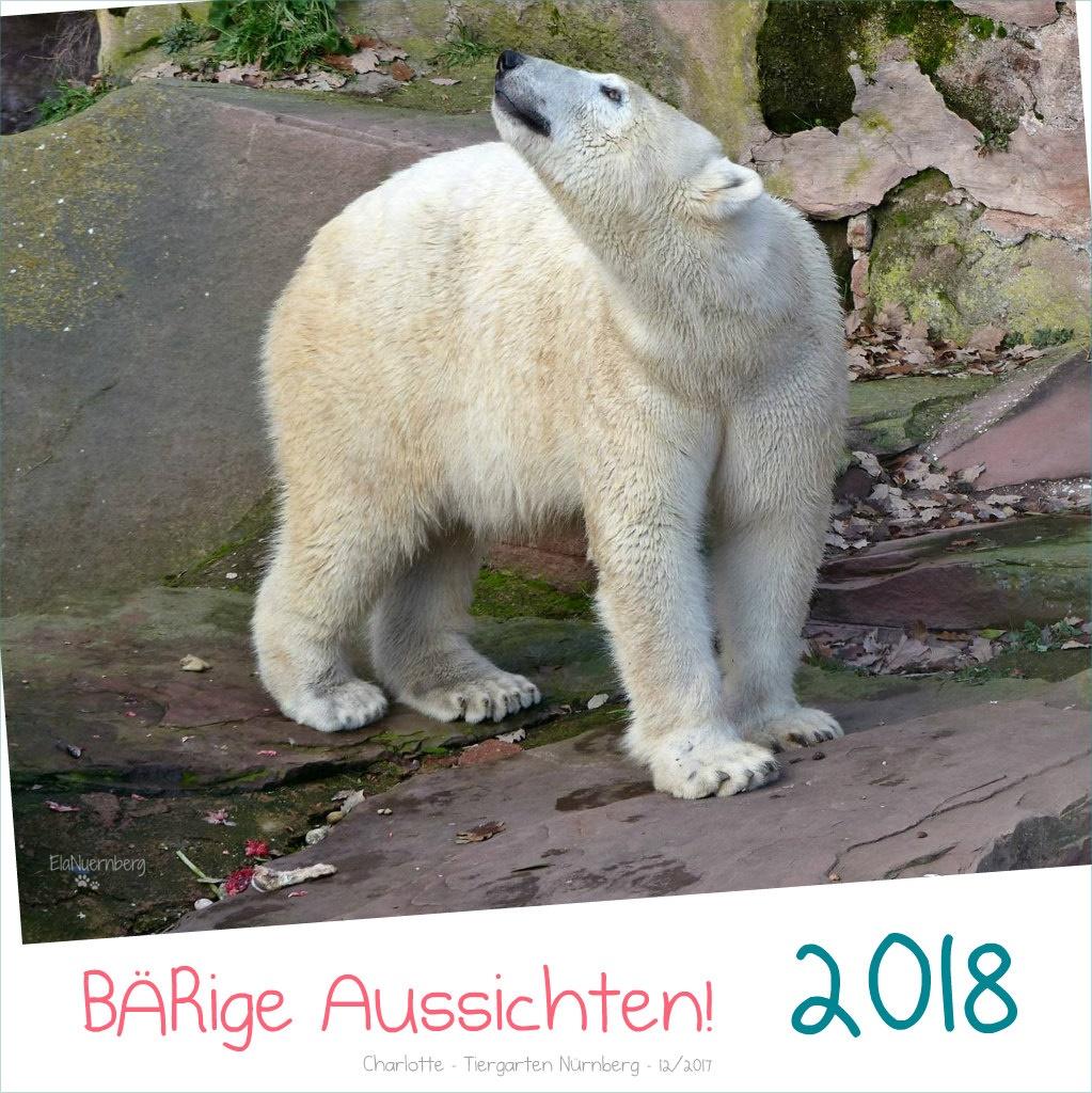 BÄRige Aussichten! - Eisbärin Charlotte im Tiergarten Nürnberg - 12/2017