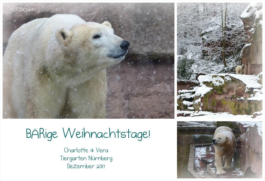 Hörst du es nicht...bald ist Weihnachten - Eisbärinnen Charlotte und Vera - Tiergarten Nürnberg - 12/2017