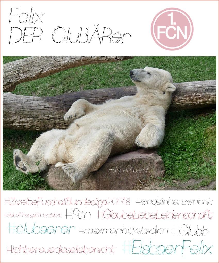 Eisbär Felix DER CluBAERer liegt am Baumstamm im Tiergarten Nürnberg - 2. Fussballbundesliga-Rückrunde