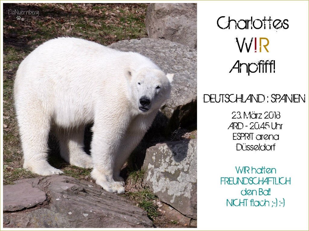 Eisbär Charlottes WIR-Anpfiff! - Tiergarten Nürnberg - 20.03.2018