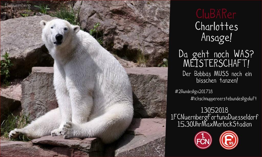 Eins...Endspurt - CluBÄRer und Eisbär Charlotte im Tiergarten Nürnberg - 05/2018
