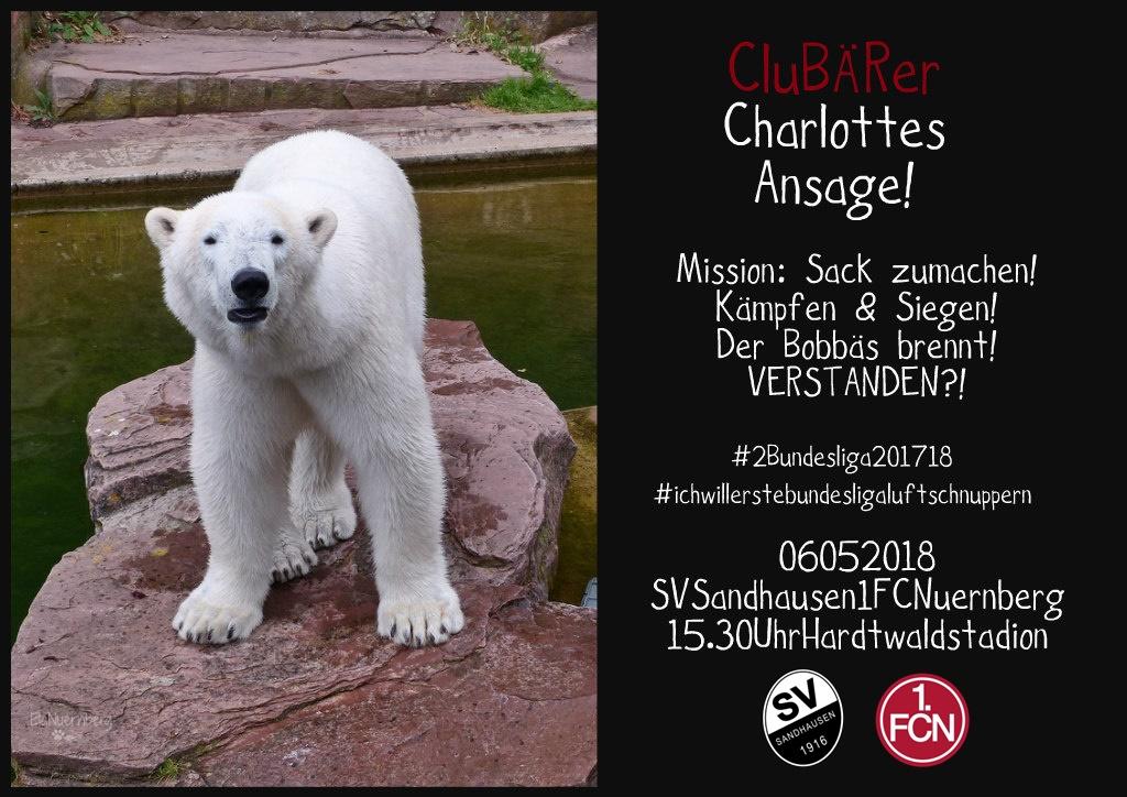 Zwo, Eins...Endspurt! - CluBÄRer und Eisbär Charlotte im Tiergarten Nürnberg - 05/2018