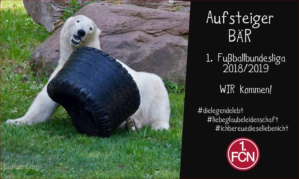 Eisbär und AufsteigerBÄR Charlotte aus dem Tiergarten Nürnberg - 05/2018