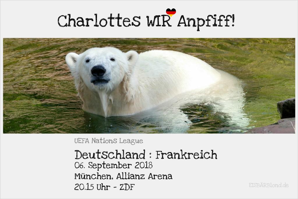 Charlottes WIR-Anpfiff - Eisbärin Charlotte im Wasser - Tiergarten Nürnberg