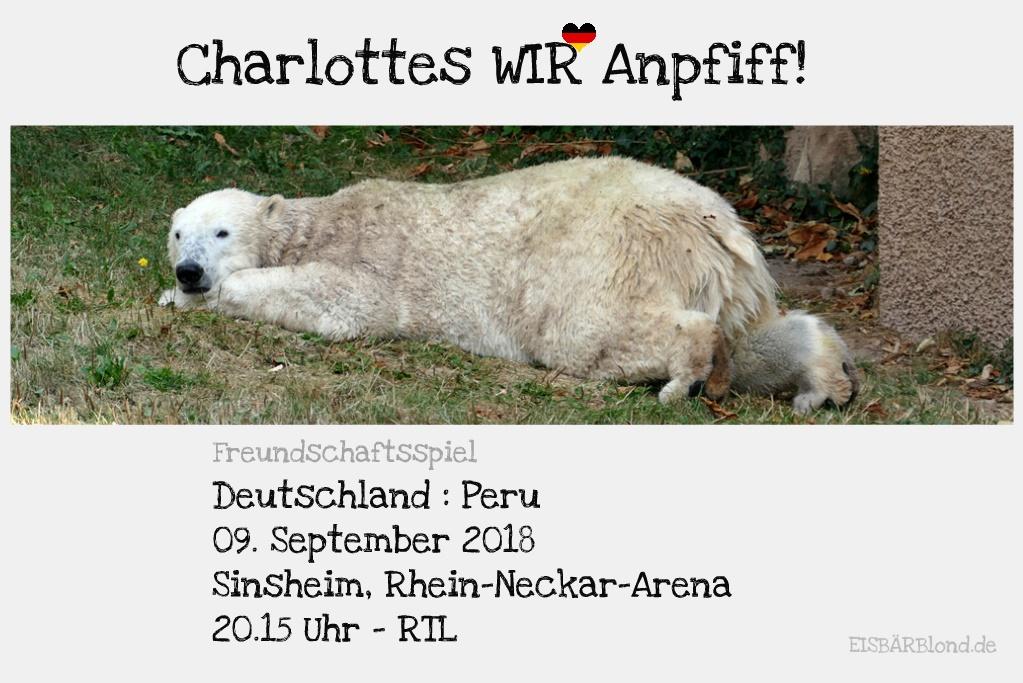 Eisbär Charlottes WIR-Anpfiff! - Eisbär Charlotte im Tiergarten Nürnberg