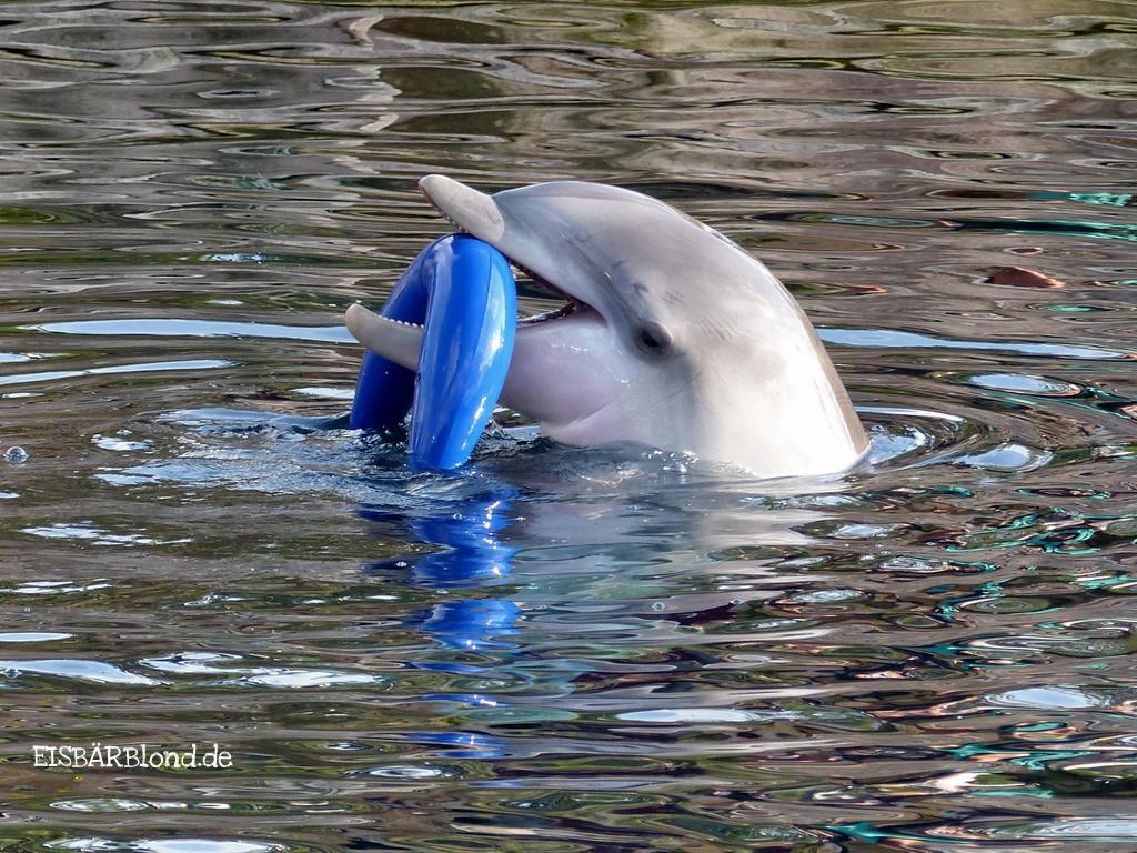 Ade Delphin MOBY - Tiergarten Nürnberg - 08-2014