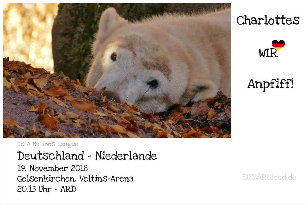 Eisbär Charlottes WIR-Anpfiff! - Tiergarten Nürnberg - 11/2018