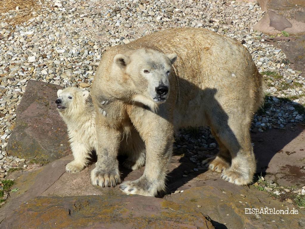 """Eisbären-Geburtstag - Vera und Charlotte """"feiern"""" gemeinsam am 21.11. Geburtstag."""