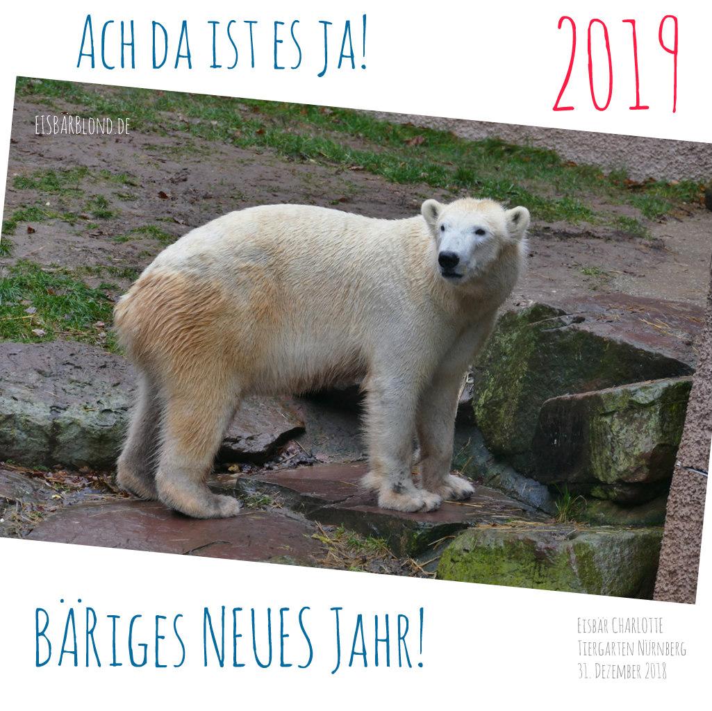 BÄRiges NEUES 2019 - Eisbär Charlotte - Tiergarten Nürnberg - 12/2018
