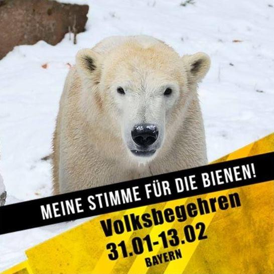 Eisbär CHARLOTTE - Meine Stimme für die Bienen - Tiergarten Nürnberg - 25.01.2019