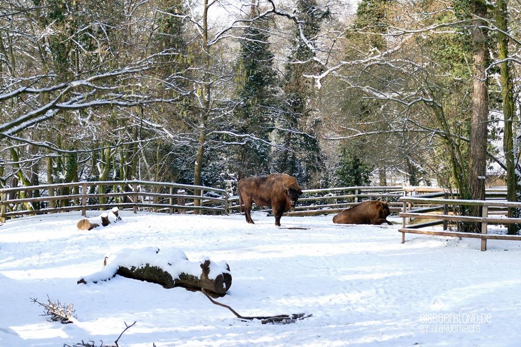Tierischer Mischmasch - Tiergarten Nürnberg - Januar 2019