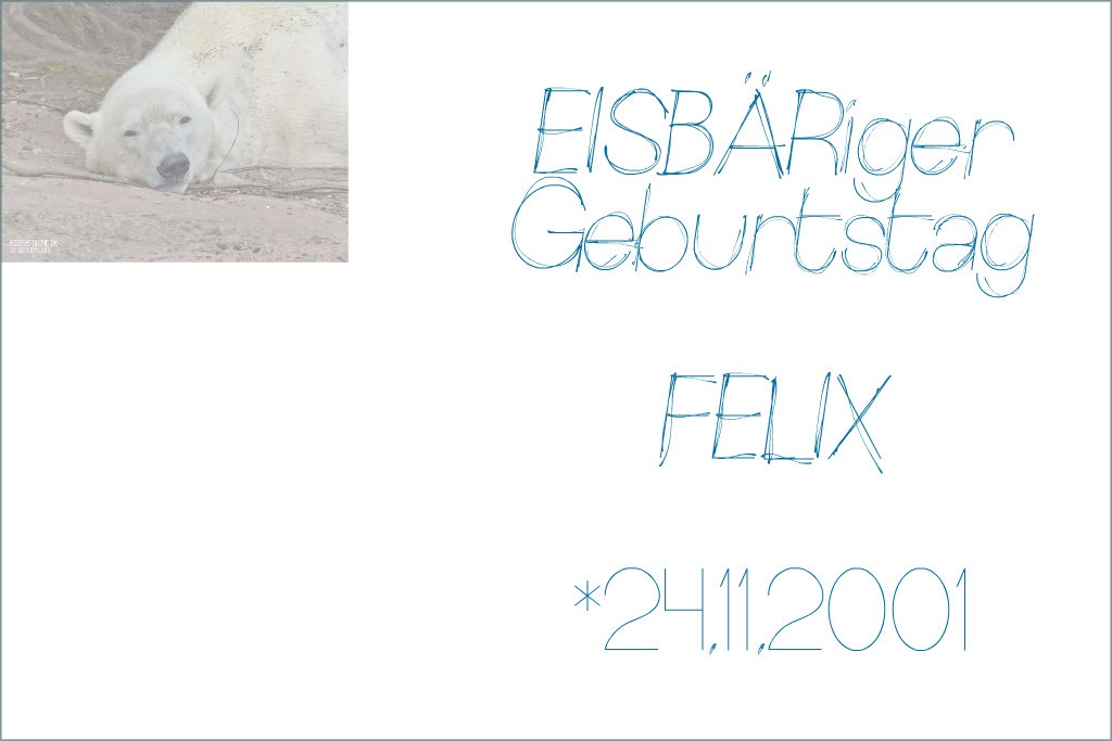 EISBÄRiger Geburtstag - FELIX - 24.11.2001 - Tiergarten Nürnberg