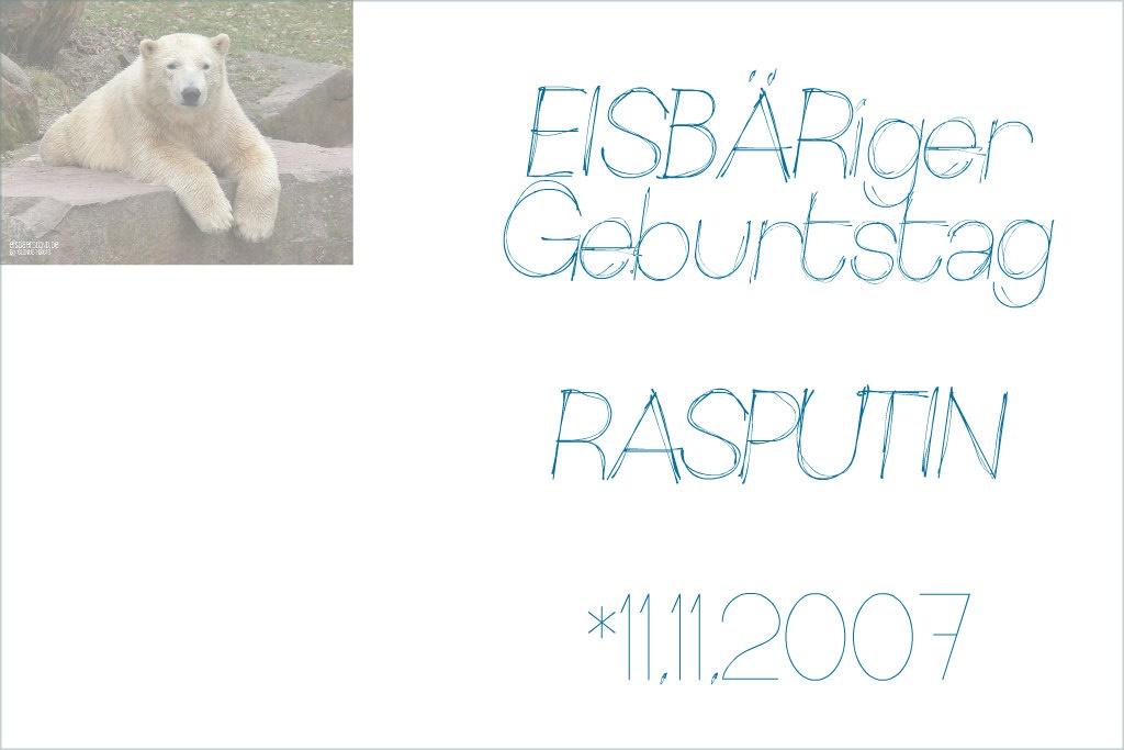 EISBÄRiger Geburtstag - RASPUTIN - 11.11.2007 - Tiergarten Nürnberg