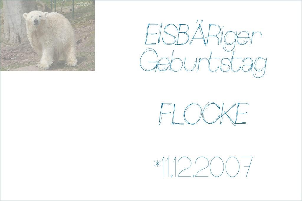 EISBÄRiger Geburtstag - FLOCKE - 02.11.2007.11 - Tiergarten Nürnberg